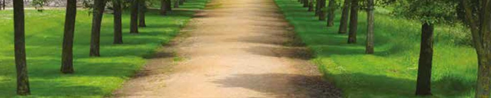 MYCORHIZES | ENRACINEMENT ET DÉVELOPPEMENT DES PLANTES