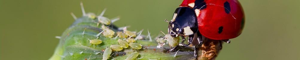 Les insectes utiles pour réussir ses cultures