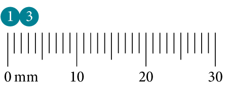 Taille de la Cochenille à bouclier