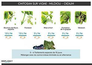 Chitosan sur vigne