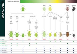 Guide d'identification des pucerons