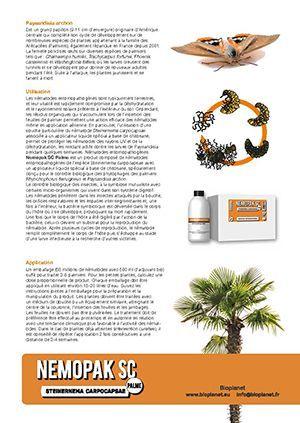 Comment lutter contre le papillon du palmier