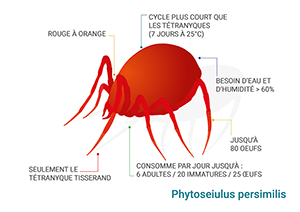Schéma Phytoseiulus persimilis